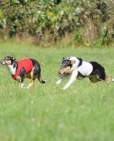 coursing-11-2011-1