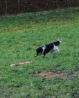 coursing-02-2012