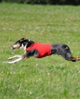 coursing-11-2011-2