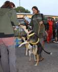 coursing-11-2011-3